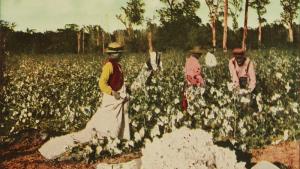 Cotton Pickers in Houston